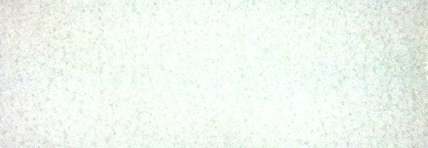 Acrylpolymer Ersatzvlies für Adorini Deluxe Befeuchter